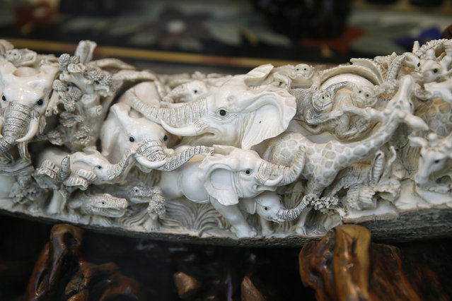 In this Monday, July 27, 2015 photo, carvings of elephants and other animals are shown inside a mammoth ivory tusk for sale in the window of a Chinatown shop in San Francisco. Merchants of carved ivory tusks and trinkets in San Francisco's Chinatown wonder what impact President Obama's sweeping new order restricting ivory sales will have in California, the country's No. 2 market for elephant ivory. (Photo by Eric Risberg/AP Photo)