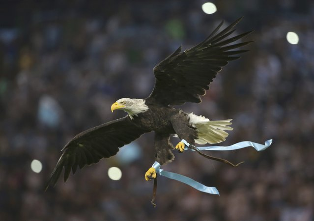 Lazio's mascot, a white headed eagle called Olimpia, flies prior to the start of their Champions League play-off soccer match against Bayer Leverkusen at the Olympic stadium in Rome, Italy August 18, 2015. (Photo by Alessandra Bianchi/Reuters)