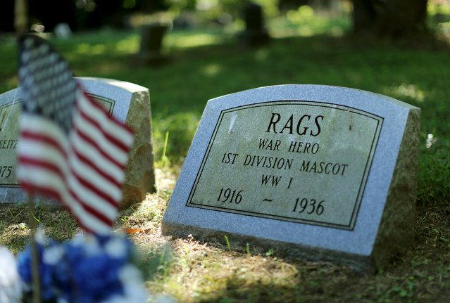 """The gravestone of """"Rags"""", a WWI mascot dog of the Army's 1st Division, is seen at the Aspin Hill Memorial Park in Aspen Hill, Maryland, July 22, 2015. """"Rags"""" crossed enemy lines in the Meuse-Argonne to deliver messages to Allied Forces. (Photo by Gary Cameron/Reuters)"""