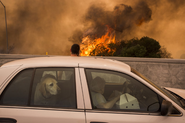 Residents on the 210 freeway try to see if their house and two of their cats on the other side of thick smoke and flames might burn near the community of Tujunga during the La Tuna Fire on September 2, 2017 near Burbank, California. Los Angeles Mayor Eric Garcetti said at a news conference that officials believe the fire, which is at 5,000 acres and growing, is the largest fire ever in L.A. People have been evacuated from hundreds of homes in Sun Valley, Burbank and Glendale. About 100 Los Angles firefighters are expected to return soon from Texas, where they've been helping survivors from Hurricane Harvey. (Photo by David McNew/Getty Images)