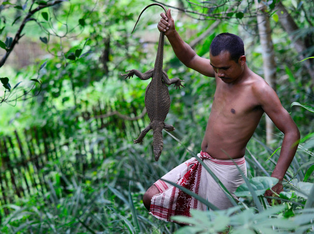 A Tiwa hunter carries a Monitor Lizard, which he caught by using traps in West Karbi Anglong district of Assam state, India, 27 September 2017. During this time of the season, Tiwa tribesmen use different types of indigenously made traps in the hills for catching animals. During the main hunting season (which starts from October and last till March), tribal villagers generally hunt deer, pig, wild goat and different wild birds. (Photo by EPA/EFE/Stringer)