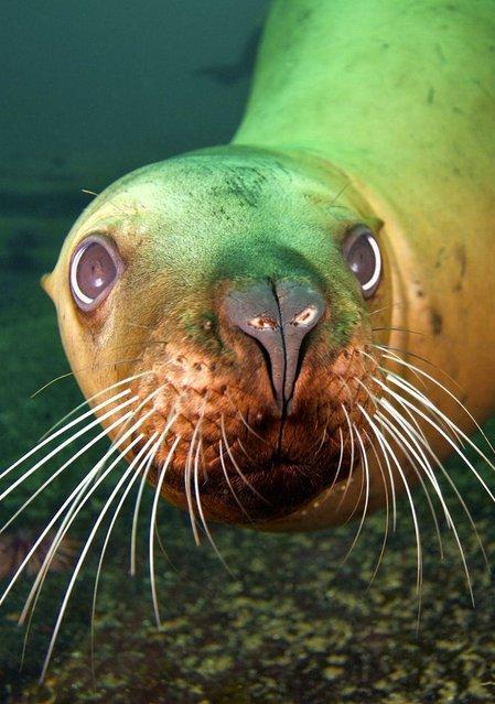 Cute little sea lions by Jon Cornforth