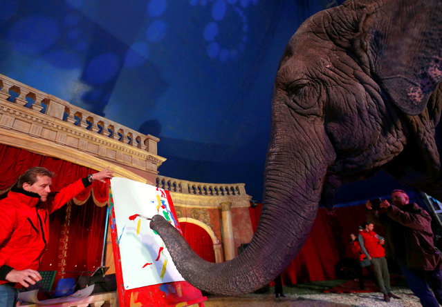 Sandra, a 42-year-old elephant, paints with her trunk in a Hungarian travelling circus of Florian Richter Circus in Budapest, Hungary November 2, 2017. (Photo by Laszlo Balogh/Reuters)