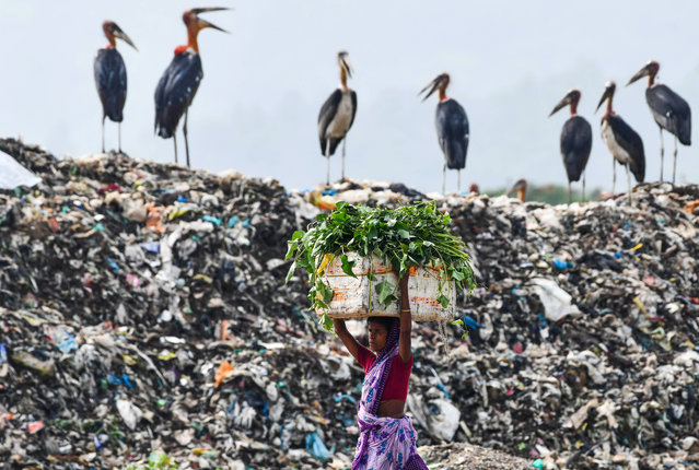 A woman carries food for her cattle past storks standing atop of one of the largest disposal sites in northeast India at the Boragaon area of Guwahati on June 4, 2020. (Photo by Biju Boro/AFP Photo)