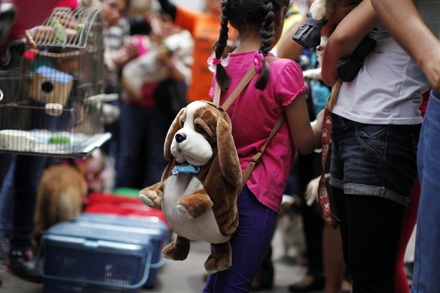 A girl carrying a dog backpack waits for a Catholic priest to bless her pet during a ceremony to commemorate the feast of Saint Francis of Assisi, outside the Saint Francis church in Lima October 12, 2014. Saint Francis is the patron saint of animals and the environment. (Photo by Enrique Castro-Mendivil/Reuters)