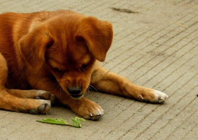 Puppy VS. Mantis