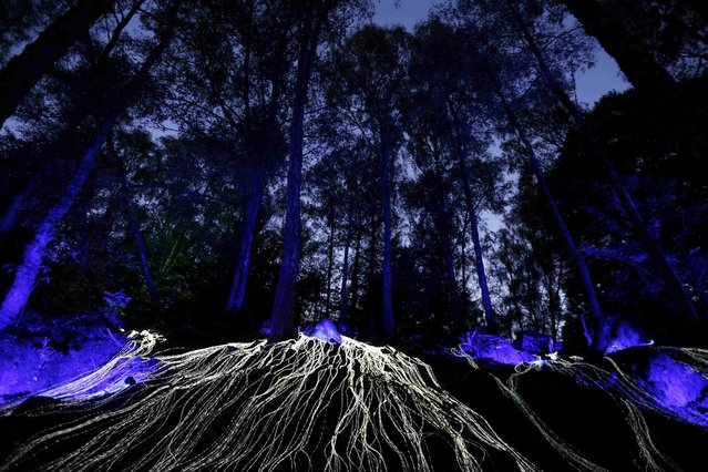 """Faskally Wood is illuminated at the launch of the annual """"Enchanted Forest"""" sound and light show near Pitlochry in Scotland, Britain September 29, 2015. The event will run until November 1. (Photo by Russell Cheyne/Reuters)"""