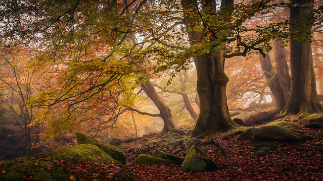 Winner, Trees, Woods and Forests category. Padley Gorge, Peak District national park, Derbyshire, England. (Photo by Dave Fieldhouse/The Guardian)