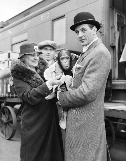 """Back in the movie capital after an absence of 11 months during which he hunted big game in Africa, Gary Cooper, accompanied by a baby chimpanzee named Toluca, which he caught and tamed, is met at the train by his mother, Mrs. Alice Cooper, as he arrived to resume him film career in Los Angeles on April 27, 1932, which will get under way with the filming of """"The Devil and the Deep"""" for Paramount. (Photo by AP Photo)"""