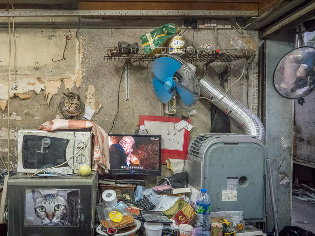 """Hong Kong Shop Cats #69. Traditional Chinese shops are, he writes, """"places in which time seems to have stood still, devoid of branding and all the other modern-day retail trickery"""". (Photo by Marcel Heijnen/Blue Lotus)"""