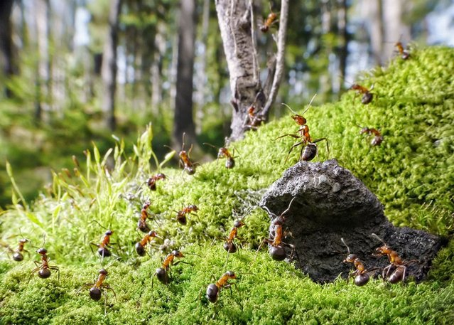 Natural Ant Photography by Andrey Pavlov Part 2