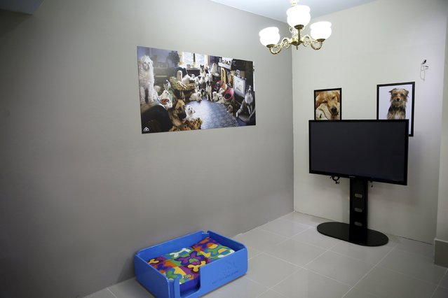 A pet family room is seen at My Second Home, a newly opened luxury pet resort and spa, in Dubai, April 24, 2015. (Photo by Ahmed Jadallah/Reuters)