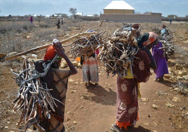 Women carry firewood on March 15, 2017 as they walk back to a makeshift camp on the outskirts of Baidoa, in the southwestern Bay region of Somalia, where thousands of internally displaced people arrive daily after they fleeing the parched countryside. (Photo by Tony Karumba/AFP Photo)