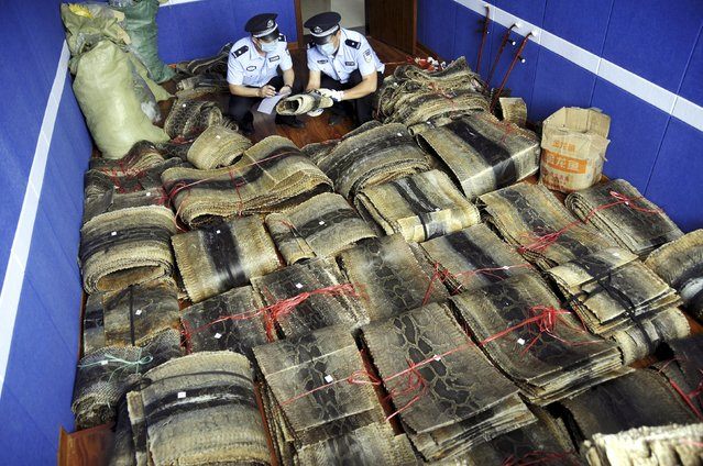 Police officers mark and register bundles of seized python skins in Linyi, Shandong province, China, July 17, 2015. (Photo by Reuters/Stringer)