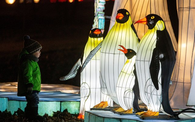 A child views large penguin-shaped light installations during the festival of Magic Chinese Lanterns at Sokolniki Park in Moscow, Russia, 29 November 2019. The event features more than 40 lighting designs created by Chinese craftsmen displayed in the park. Some of the lanterns reach more than eight meters in height and 20 meters in length. (Photo by Sergei Ilnitsky/EPA/EFE)