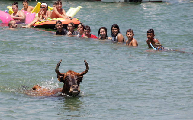 """A bull swims next to revellers after it jumped into the sea during the """"Bous a la Mar"""" festival in the coastal town of Denia, Spain July 10, 2017. (Photo by Heino Kalis/Reuters)"""