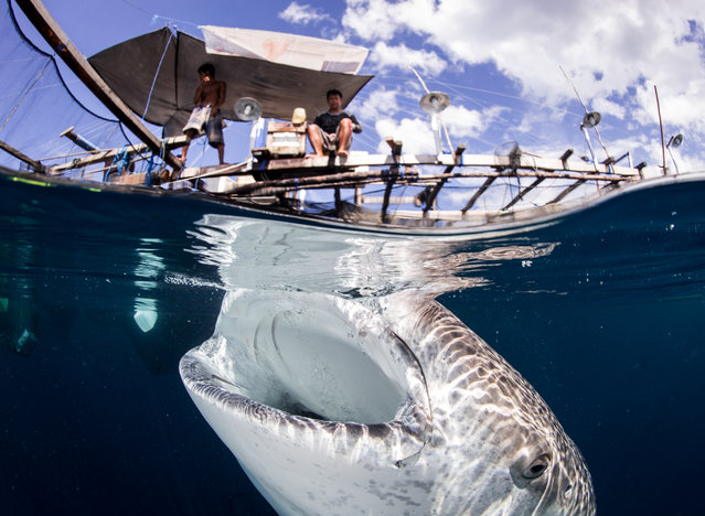 """""""Indonesia... Land and Ocean of smiles"""". Interaction between whale sharks and local fishermen in Papua Indonesia. Smiles above and below the water. I didn't know what to expect when I travelled to Papua. Photo location: Cenderwashe Bay, Papua, Indonesia. (Photo and caption by Tracey Jennings/National Geographic Photo Contest)"""