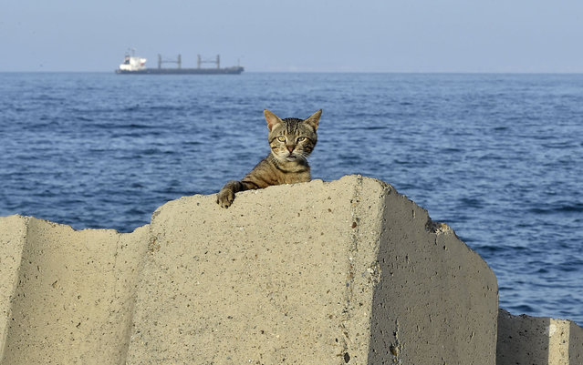 A cat is pictured at the sea front promenade before a curfew imposed by authorities to prevent the spread of the COVID-19 coronavirus in the Bab el-Oued district of Algeria's capital Algiers on June 29, 2020. (Photo by Ryad Kramdi/AFP Photo)