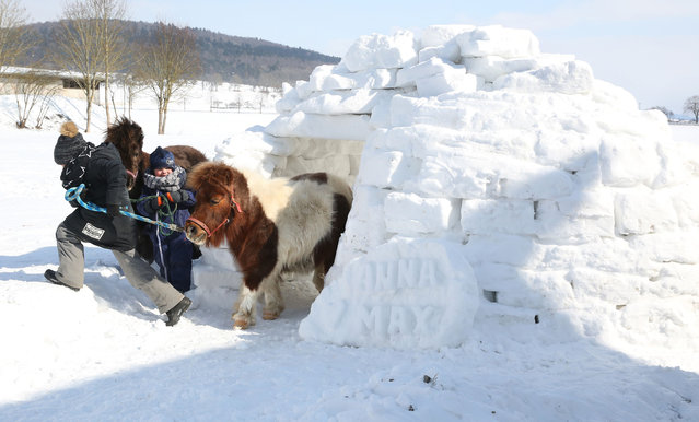 Anna (L) and Max play with their ponies Ted and Papaya at –8 degrees Celsius in an igloo in Langenenslingen, southern Germany on February 26, 2018. (Photo by Thomas Warnack/AFP Photo)