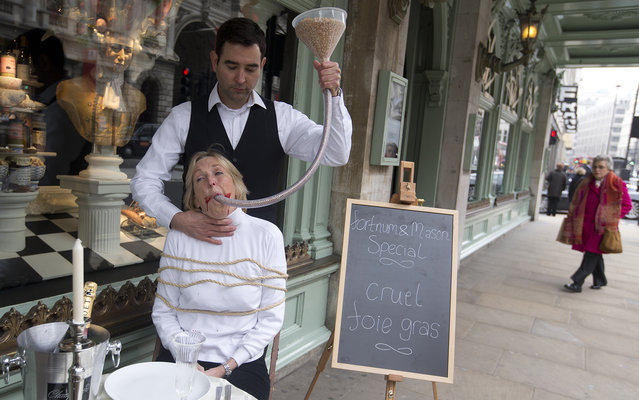 People for the Ethical Treatment of Animals founder Ingrid Newkirk with a funnel of feed in her mouth held by with helper Robbie Le Blanc as they pose during a media event outside an upmarket department store, to campaign against sale of foie gras in the store, and the way it is made in London, Wednesday, March, 20, 2013. Foie gras is made from the liver of specially  fattened duck or goose by force feeding. (Photo by Alastair Grant/AP Photo)