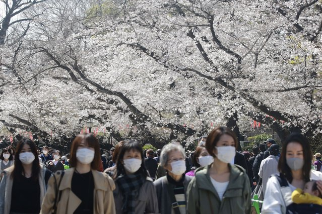 People wearing face masks to protect against the spread of the coronavirus walk under cherry blossoms in Tokyo, Tuesday, March 23, 2021. (Photo by Koji Sasahara/AP Photo)