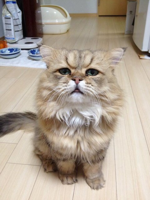 Disappointed Cat aka Foo-Chan