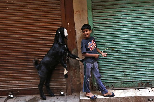 A boy plays with a goat in front of closed shops in an alley in the old quarters of Delhi, India, on September 22, 2013. (Photo by Mansi Thapliyal/Reuters)