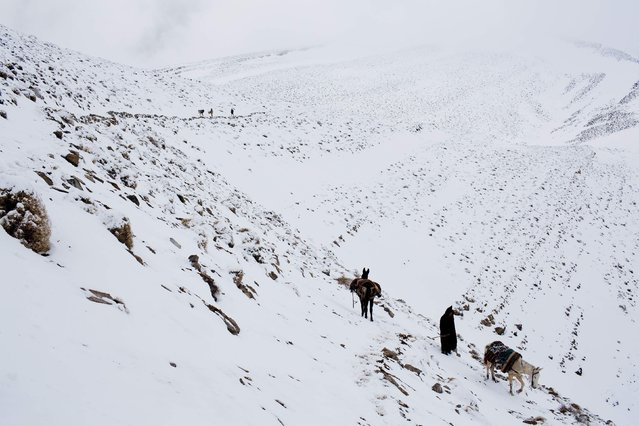 Berber men return home after transporting food and goods on mules between villages in the High Atlas region of Morocco February 13, 2015 as the paths are too rocky for vehicles. (Photo by Youssef Boudlal/Reuters)