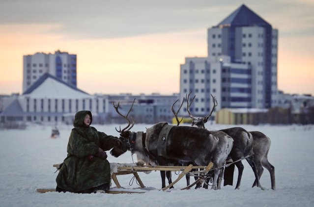 In this photo taken on Saturday, March 14, 2015, a Nenets man sits on a reindeer sleigh at the Reindeer Herder's Day holiday in the city of Nadym, in Yamal-Nenets Region, 2500 kilometers (about 1553 miles) northeast of Moscow, Russia. (Photo by Dmitry Lovetsky/AP Photo)
