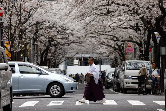 A man walks under the blooming cherry blossoms in Tokyo, Sunday, March 29, 2015. (Photo by Shizuo Kambayashi/AP Photo)