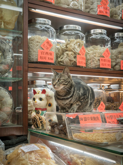 Hong Kong Shop Cats #37. Some shop cats have been adopted for their mouse-hunting skills, while others are welcome squatters, as valued for their company as for their claws. (Photo by Marcel Heijnen/Blue Lotus)
