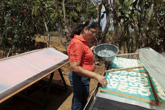 Alicia Ortega, who is a member of the Solar Project Foundation for Nicaraguan Women (FUPROSOMUNIC), prepares fruit to dehydrate on the outskirts of Masaya city April 15, 2015. (Photo by Oswaldo Rivas/Reuters)