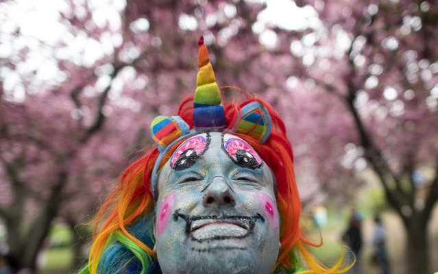 A man in a rainbow unicorn costume poses in front of a cherry during the Cherry blossom Festival at the Botanic Garden in Brooklyn, New York, April 28, 2019. (Photo by Johannes Eisele/AFP Photo)
