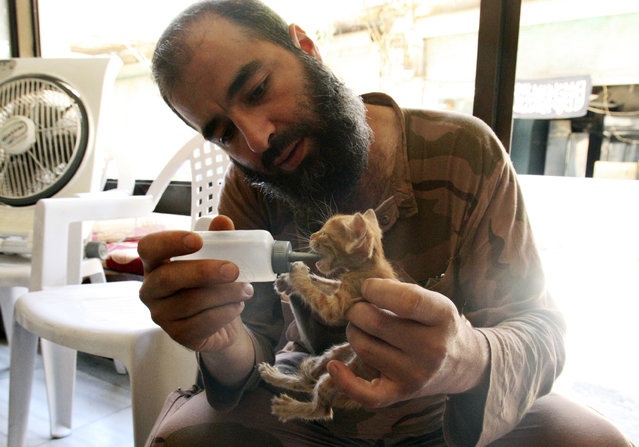 """A """"Free Syrian Army"""" fighter feeds a cat in al-Jdeideh neighborhood in the old city of Aleppo, Syria August 27, 2013. (Photo by Ammar Abdullah/Reuters)"""