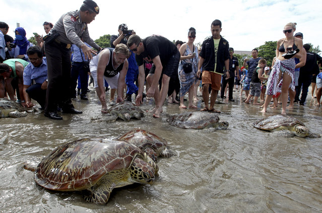 Foreign tourists watch sea turtles to be released at the Kuta beach on the Indonesian island of Bali on Thursday, April 14, 2016. Bali police released about thirty one turtles which they seized last week from illegal poachers. (Photo by Firdia Lisnawati/AP Photo)