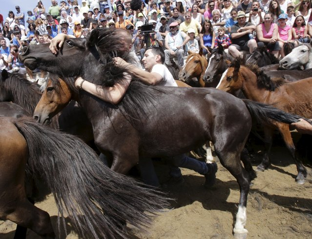 "Revellers trie to hold on to a wild horse during the ""Rapa das Bestas"" traditional event in the village of Sabucedo, northwestern Spain, July 5, 2015. (Photo by Miguel Vidal/Reuters)"