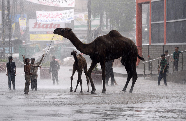 Pakistani children play with camels on a street during heavy monsoon rains in Lahore, Punjab Province on August 1, 2019. (Photo by Arif Ali/AFP Photo)