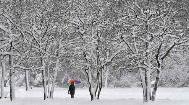 A pedestrian walks with an umbrella in a snow covered park in Munich, southern Germany on January 10, 2019. (Photo by Christof Stache/AFP Photo)