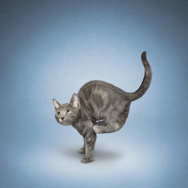 Yoga Cats By Daniel Borris