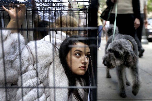 A dog looks on as Alejandra Mendoza, a member of People for the Ethical Treatment of Animals, protests from an animal cage outside Jacques Ferber Furs iin Philadelphia