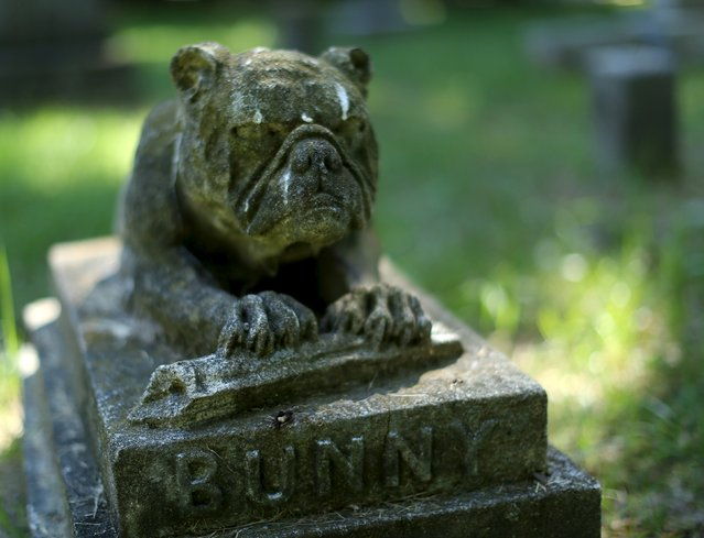 """A dog's headstone for """"Bunny"""" is seen at the Aspin Hill Memorial Park in Aspen Hill, Maryland, July 22, 2015. (Photo by Gary Cameron/Reuters)"""