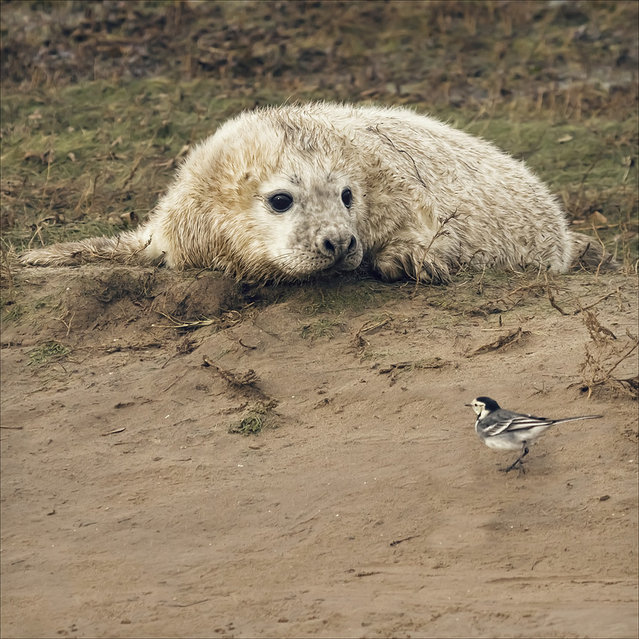 The pup and the wagtail.