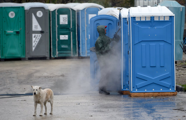 A dog looks on as a worker cleans a picture portable toilet cabin on the grounds of a rental company, the Toi-Toi Ltd, in an industrial area of Pilisvorosvar, about 20 km from the Hungarian capital Budapest, on November 16, 2017. (Photo by Attila Kisbenedek/AFP Photo)