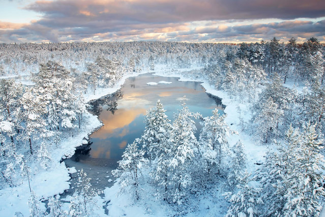 """Winter wonderland"". Morning in bog... fresh snow, first sunlight, silent, innocent nature... Estonia – wonderland. Photo location: Viru bog, Estonia. (Photo and caption by Jan Lepamaa/National Geographic Photo Contest)"