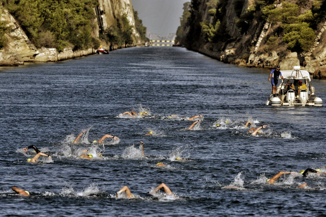 """Participants of a """"swim accross the canal"""" race swim through  the 6,346-meter long Corinth canal, near the city of Corinth, Greece on September 27, 2016. The canal cuts at straight line the Corinth Isthmus with the width of around 23 meters, and the depth ranging between 7 and 8 meters. The Corinthian Isthmus is a narrow strip of land that connects mainland Greece with the Peloponnese, and  the canal that has been opened shortens the sea route between the Ionian and the Aegean Seas. (Photo by Valerie Gache/AFP Photo)"""
