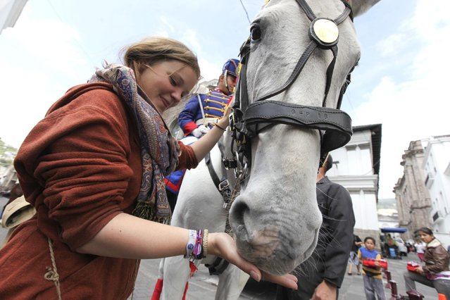 Belgian tourist Tannya touches a horse shortly before a change of palace military guard parade in Quito November 24, 2014. This parade has become one of the most attractive events on Mondays for tourists and local residents. (Photo by Guillermo Granja/Reuters)