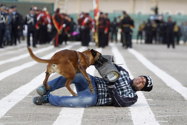 A police officer and a police dog  take part in a demonstration during a ceremony marking Iraqi Police Day's 93rd anniversary at a police academy in Baghdad January 8, 2015. (Photo by Ahmed Saad/Reuters)