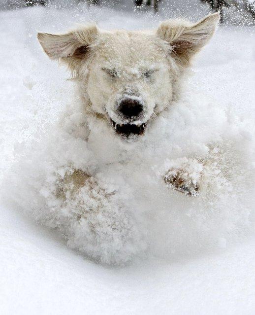 """I just love the snow & winter!!!!"". (Photo by Per Ottar Walderhaug)"