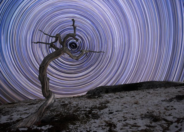 A weathered juniper tree in Montana's northern Rocky Mountains is filled with arced star trails and in the centre sits Polaris, the brightest star in the constellation of Ursa Minor. (Photo by Jake Mosher/Astronomy Photographer of the Year 2018)