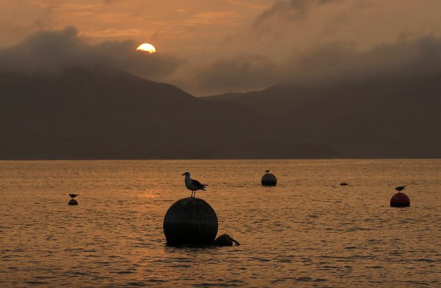 A seagull stands on a buoy in front of San Lorenzo's island  in the harbour of La Punta in Callao, Peru, January 31, 2015. (Photo by Mariana Bazo/Reuters)